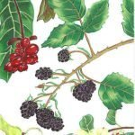"'Blackberries' - Acrylic on paper - framed - 25 x 13"" - £175.00"