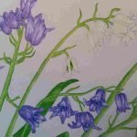 "'Bluebells' Acrylic on paper - framed - 19 x 15"" - £155.00"